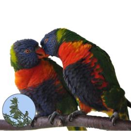 """Houden van Dieren (2016, week 8) """"Het Spijsverteringsstelsel van Vogels"""""""