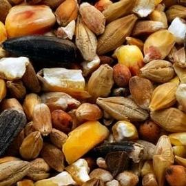Garvo Gemengd Graan met gebroken maïs en zonnepitten, 20 kg
