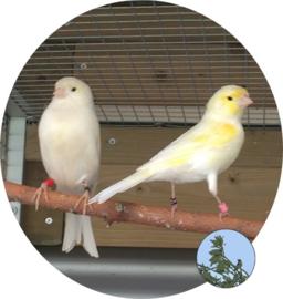 """Houden van Dieren (2018, week 12) """"Het onstaan van de Vogelsport"""""""
