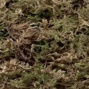 Sisal Fibre Moss, nestmateriaal 100 gram