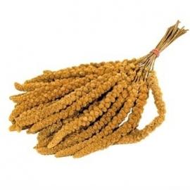 Trosgierst Geel - Franse kwaliteit