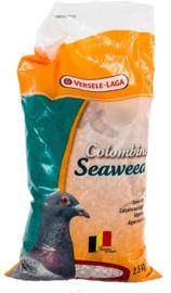 Colombine Seaweed - 2,5 kg