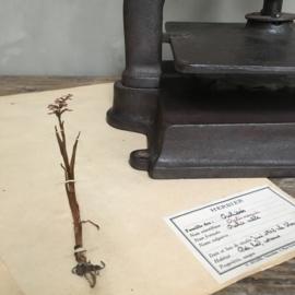 OV20110682 Oude Franse bloemen- of boekenpers van gietijzer in prachtige, nog te gebruiken staat! Afmeting: 34 cm. hoog / 35 cm. breed. Alleen ophalen.