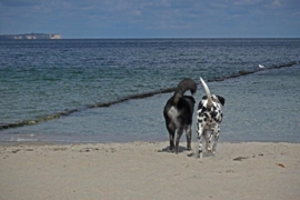 Hond en zomer