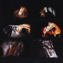 Paarden Placematset