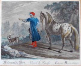 Russische Paard