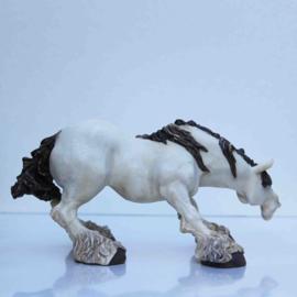 Komisch paardenbeeld hoofd laag