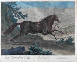 Boheemse  Paard Ridinger