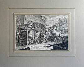 Paardentandarts