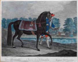 Normandische Paard. Ridinger.