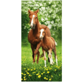 Strandlaken 70x140 Vos Paard Veulen
