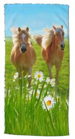 Strandlaken Paarden Haflingers