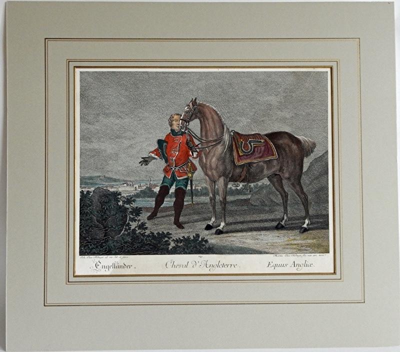 Engelse paard van Ridinger