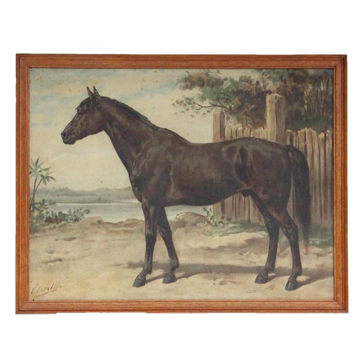 Het Australische Paard, Otto Eerelman.