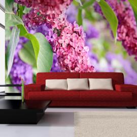 Roze Paars Bloemen nr 350