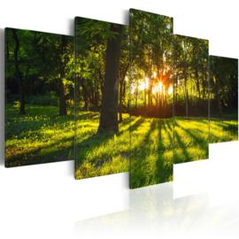 921 Bomen Bos Natuur