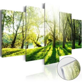 24 Bomen Natuur Acrylglas Schilderij