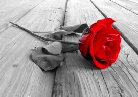 Rode Roos nr 149