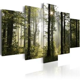 164 Bos Bomen Natuur