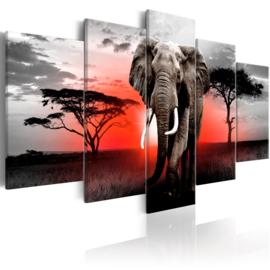 788 Afrika Olifant