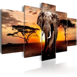 786 Olifant Afrika