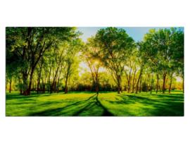5 Natuur Bomen Zonlicht Glas Schilderij