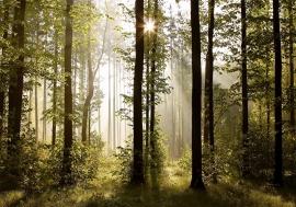 Bomen Bos nr33