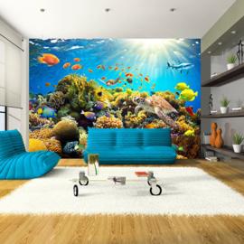 Aquarium Vissen Zee nr 536