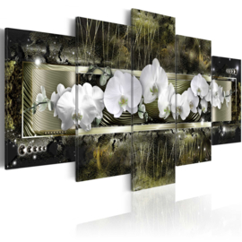 640 Orchidee Modern