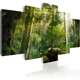 nr54 Natuur Bomen Bos
