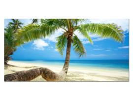 7 Paradijs Palmboom Glas Schilderij