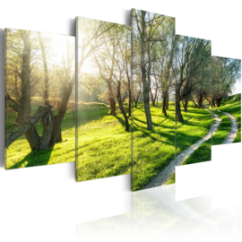 nr55 Natuur Bomen Pad