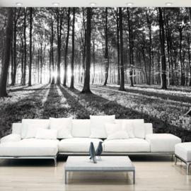 Zwart Wit Bos Natuur nr 383