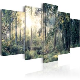 562 Natuur bos Bomen