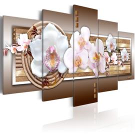 101 Modern Orchidee