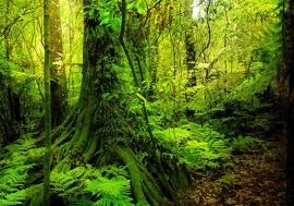 Bomen Bos nr35