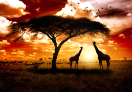 Afrika Natuur Giraffe nr 133