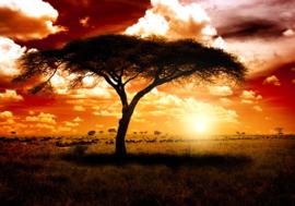 Afrika Natuur Nr 134