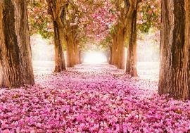 Roze Bloemen Pad nr93