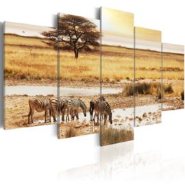 748 Zebra Afrika