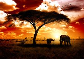 Afrika Olifant Natuur nr 132