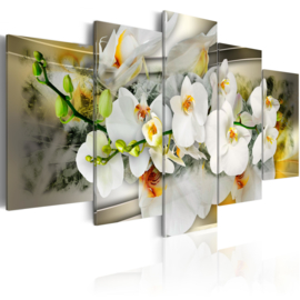 152 Modern Orchidee