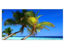 37 Palmboom Paradijs Glas Schilderij