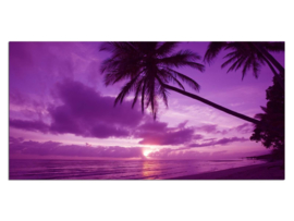 36 Paars Palmboom Sunset Glas Schilderij