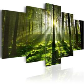330 Green Forrest