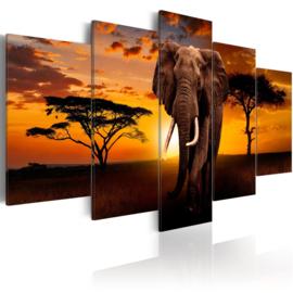 385 Olifant Afrika