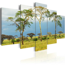 1017 Afrika Natuur