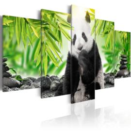 274 Panda Beer Natuur