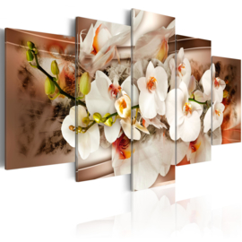 153 Modern Orchidee