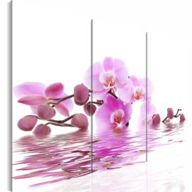 nr 49 Roze Orchidee